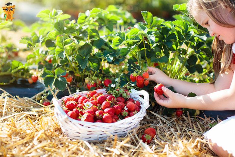 Какие полезные свойства имеют июньские вкусности - Learning.ua